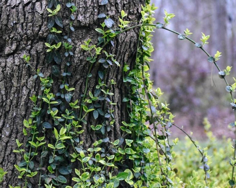 tree .JPG